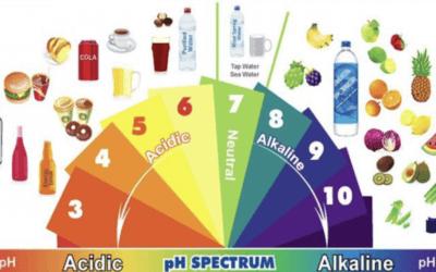 Importance de l'équilibre acido-basique de votre corps
